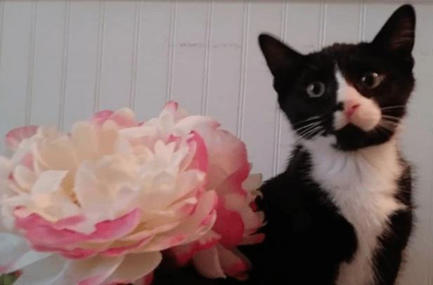Gato se mete a la licuadora con ciclo de lavado de 40 minutos; sobrevive