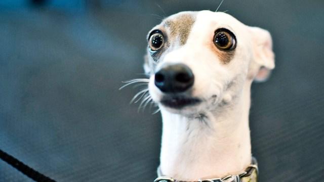 Perros Noruega, Enfermedad Perros, Perros Enfermedades, Perros, Alerta Enfermedad Perros En Noruega, Perros En Noruega Se Enferman, Enfermedad Desconocida Perros Noruega