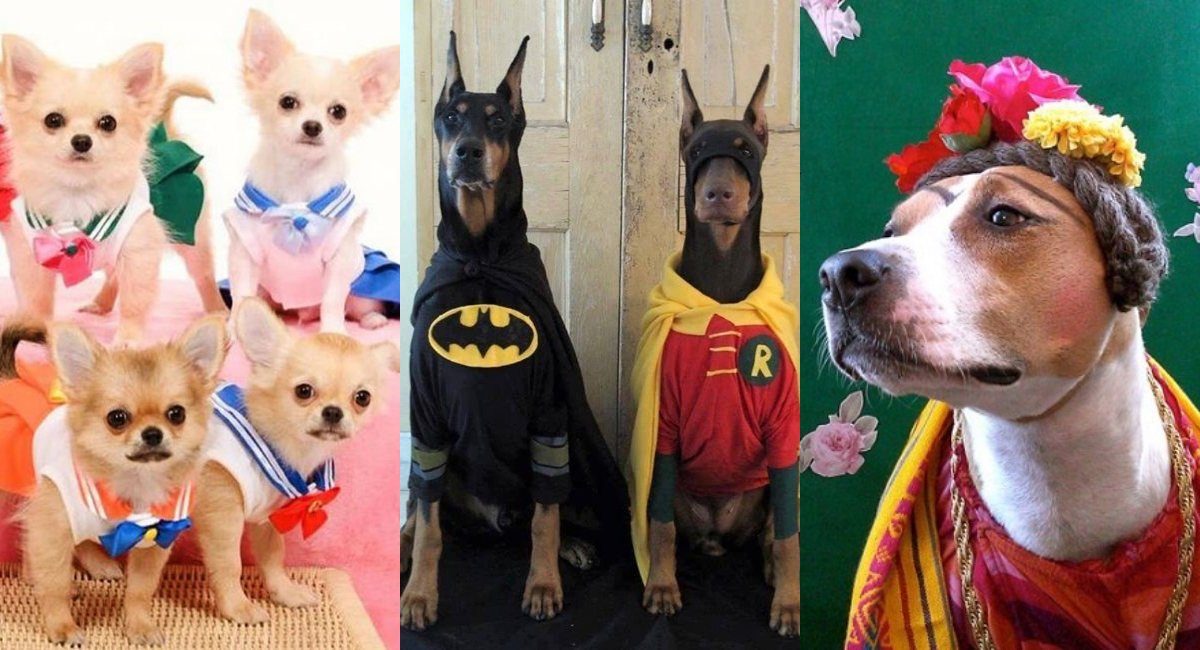 disfraz-halloween-dia-de-muertos-para-perro-faciles-2019