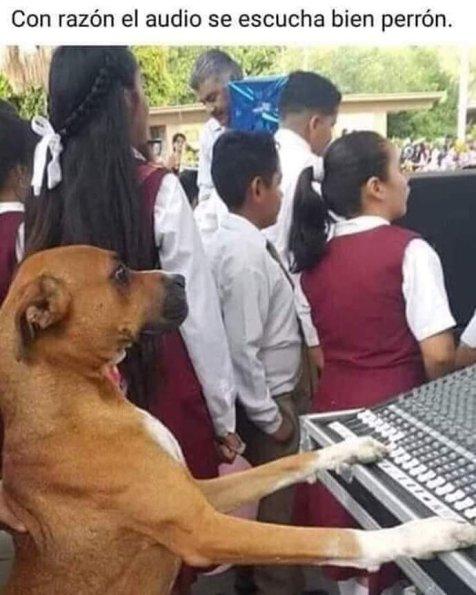 meme-perro-ingeniero-audio