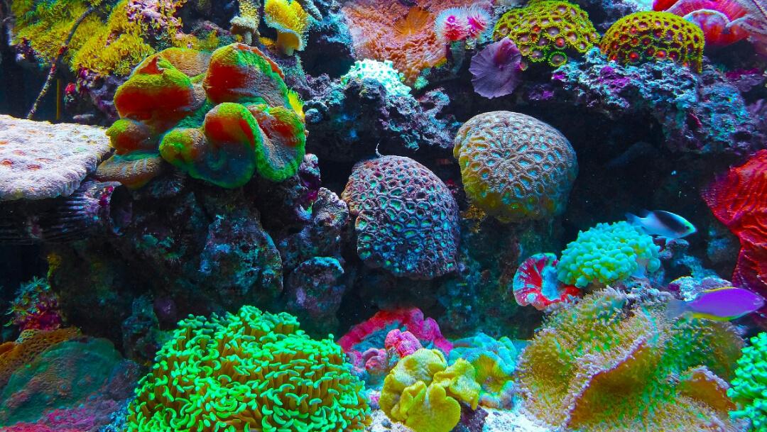Así podemos ayudar a los arrecifes y evitar el coral blanco
