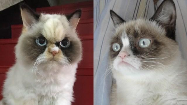 Meow Meow, el nuevo Grumpy Cat que luce más enojado