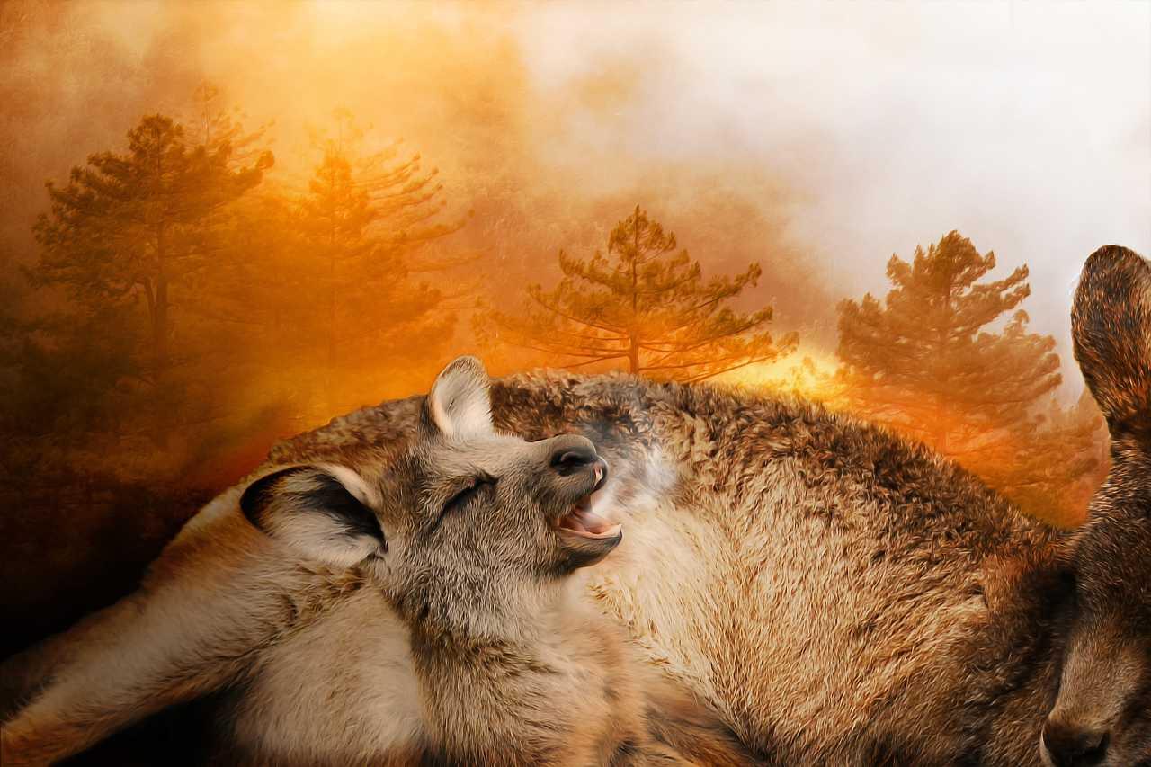 Los incendios forestales de Australia en 2020