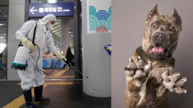 China ordena sacrificar mascotas por crisis de Coronavirus