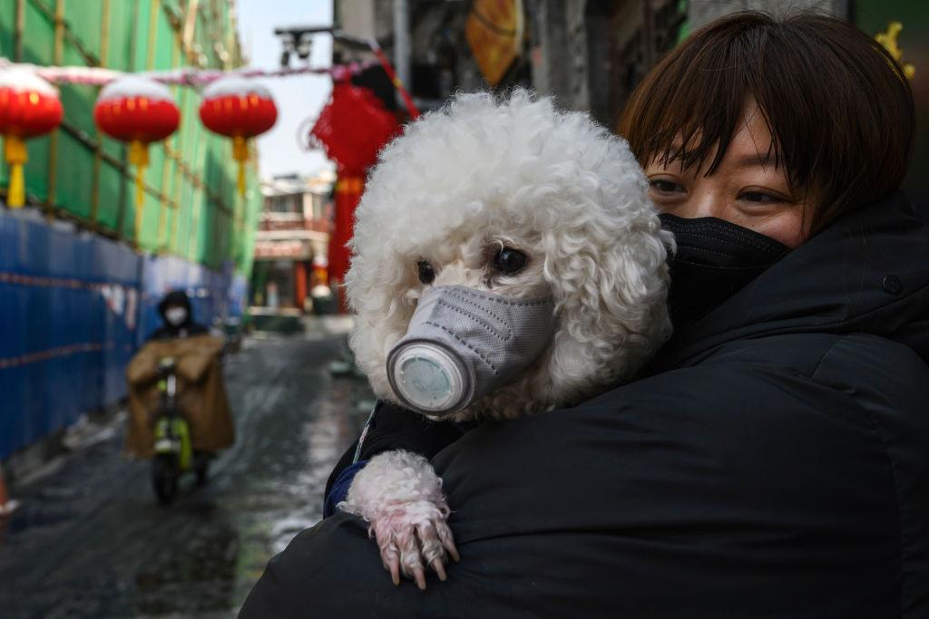 Muere el primer perro con coronavirus