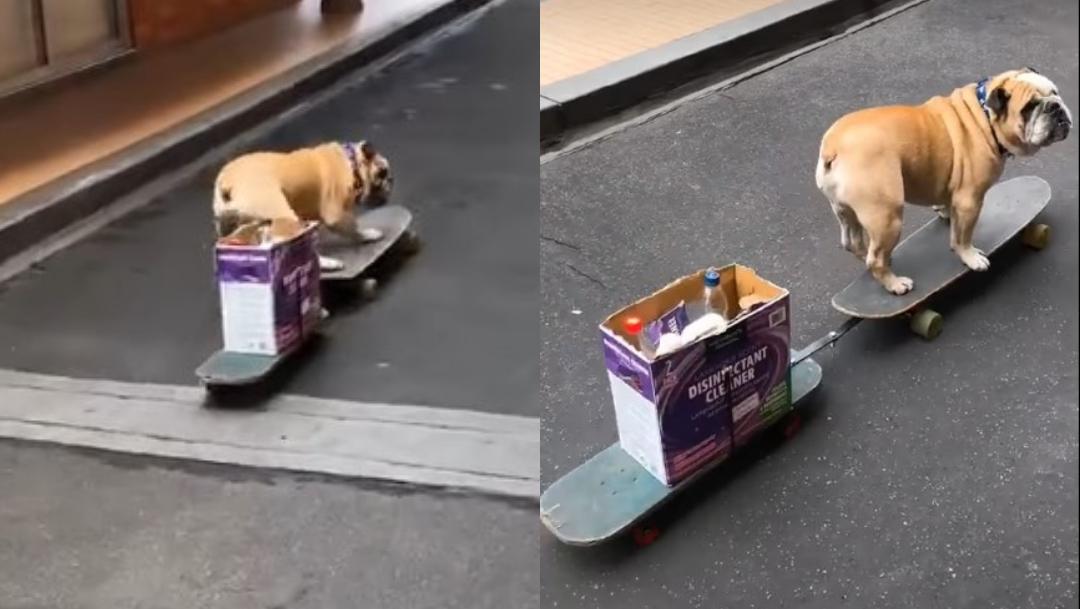 Perro va por despensa en patineta en video viral en TikTok