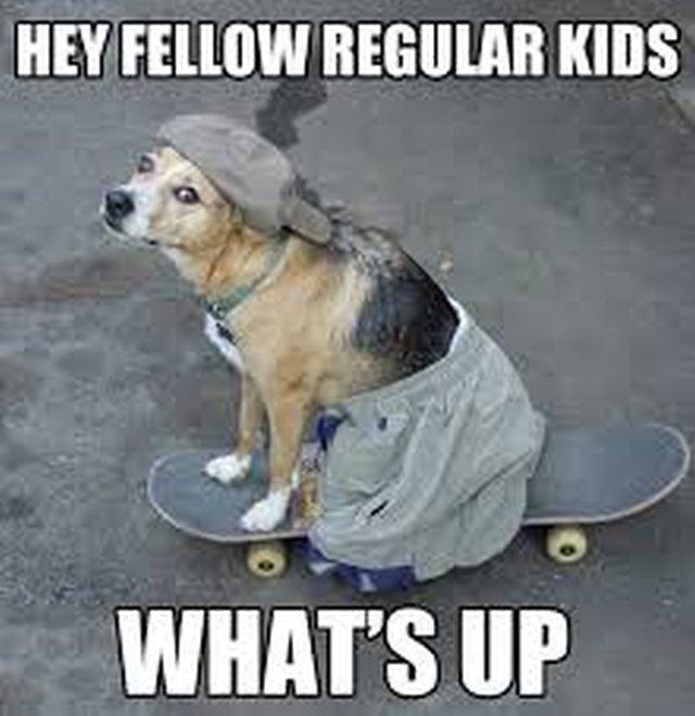 Perro va por la despensa en patineta