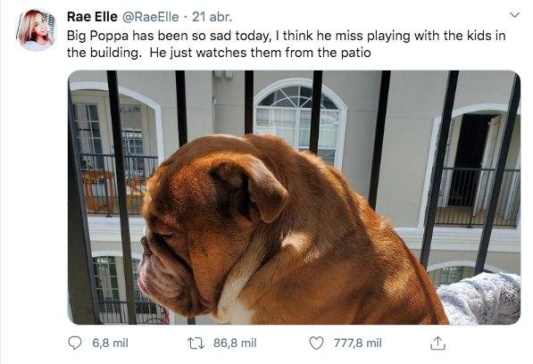 Big Poppa perro bulldog triste