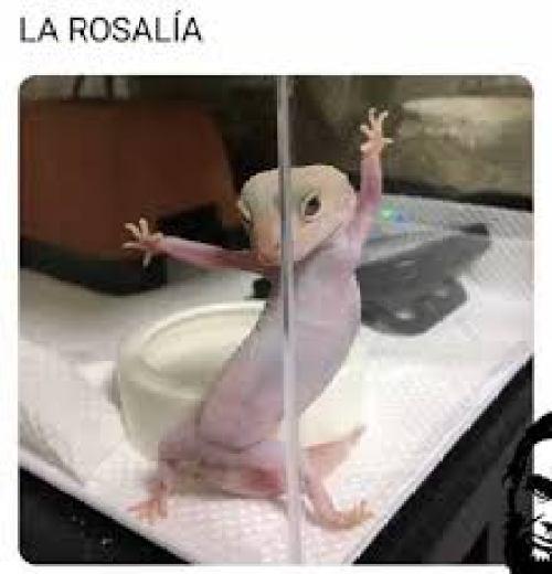 Así será la presentación de Rosalia en #SeAgradece