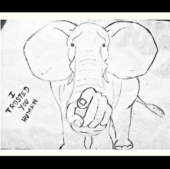 Elefante embarazada muere tras comer piña con explosivos