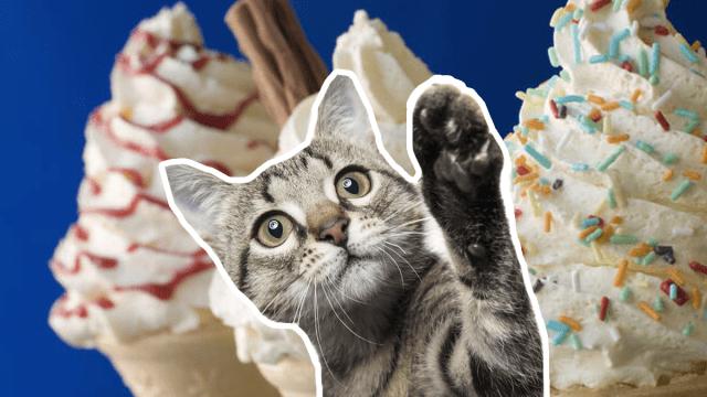 Gatito reacciona al helado por primera vez