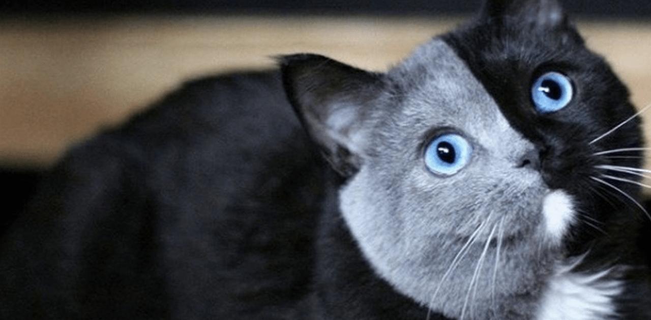 La genética nunca miente y los hijitos de este gato... se parecen a él a pesar de ser diferentes.