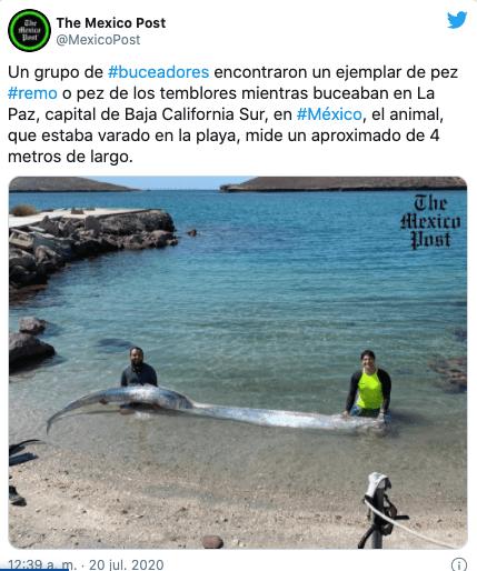 Pez-Remo-México-La-Paz