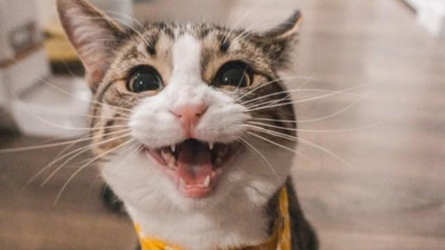Gatos sí saben su nombre prefieren ignorarte al llamarlos
