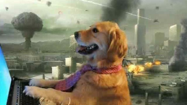 Memes del perrito en la computadora en plena pandemia
