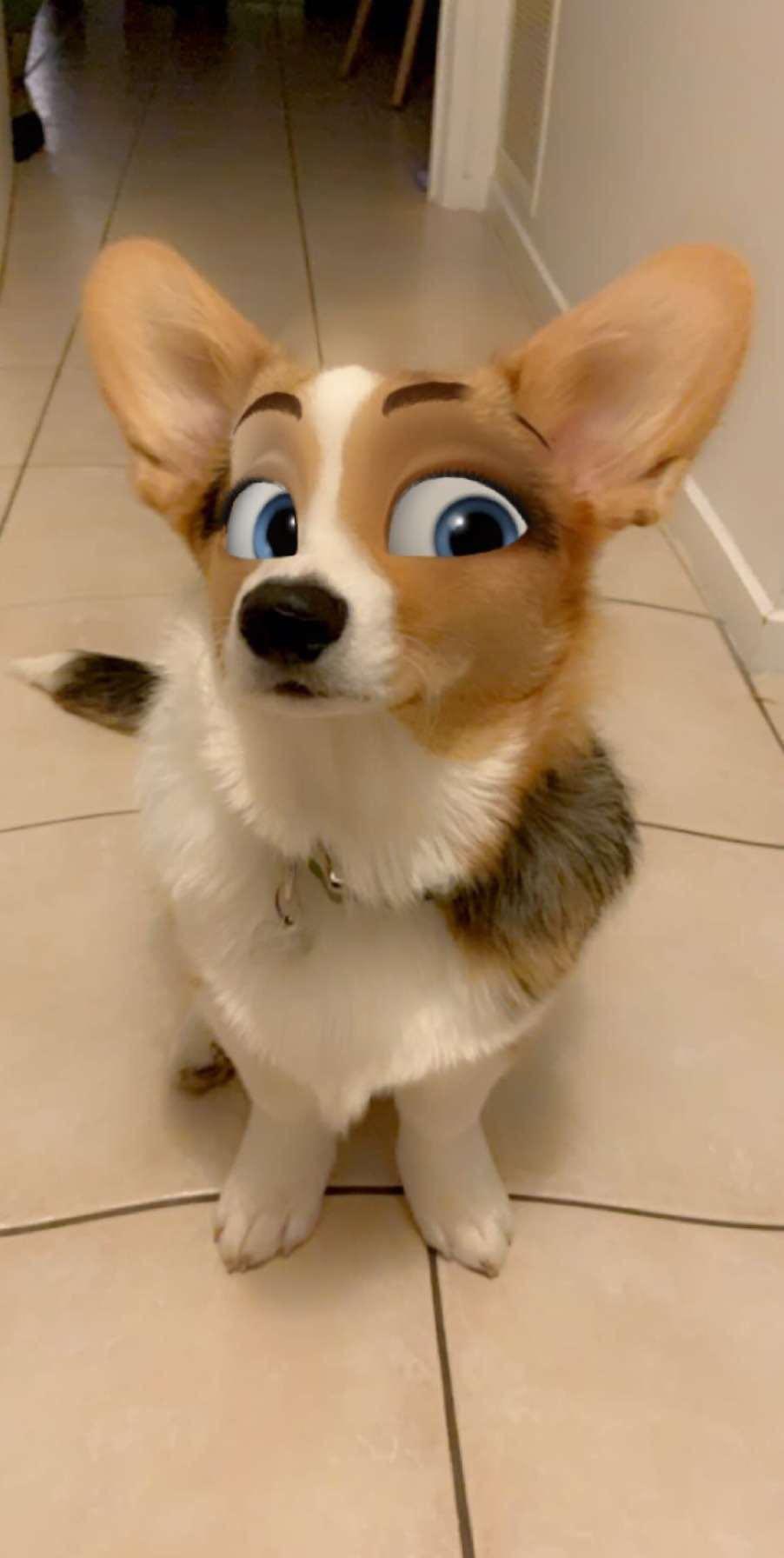 Crean Filtro para Perros que los convierte en personajes de caricatura y se ven adorables