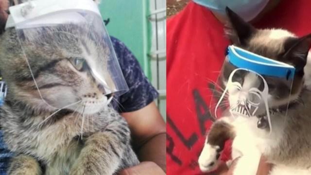 Crean caretunas, caretas para gato para protegerlos Covid