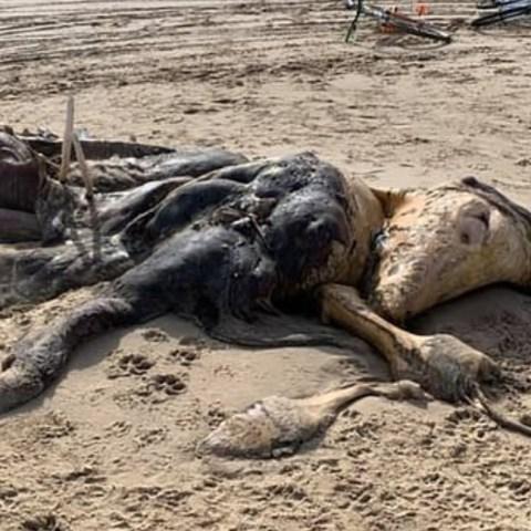 Aparece aterradora criatura en playa Liverpool es alien