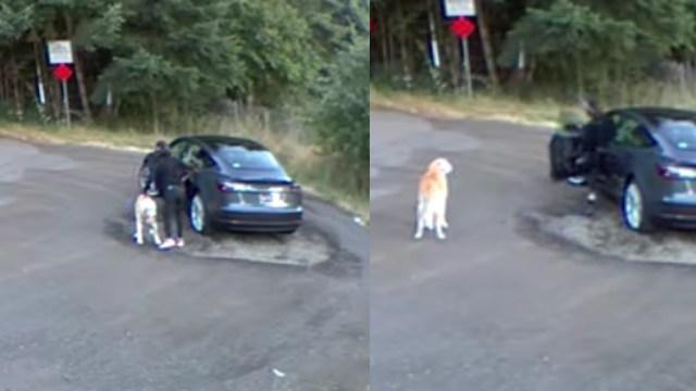 Mujer engaña a su perro y lo abandona en carretera