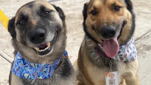 Restaurante de Toluca contrata perros como sus meseros