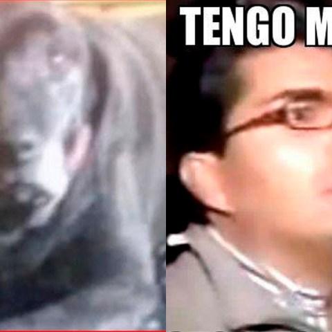 Conoce el reto viral de facebook perro payaso