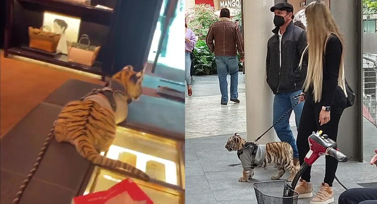 Captan a mujer paseando con tigre en Plaza Antara