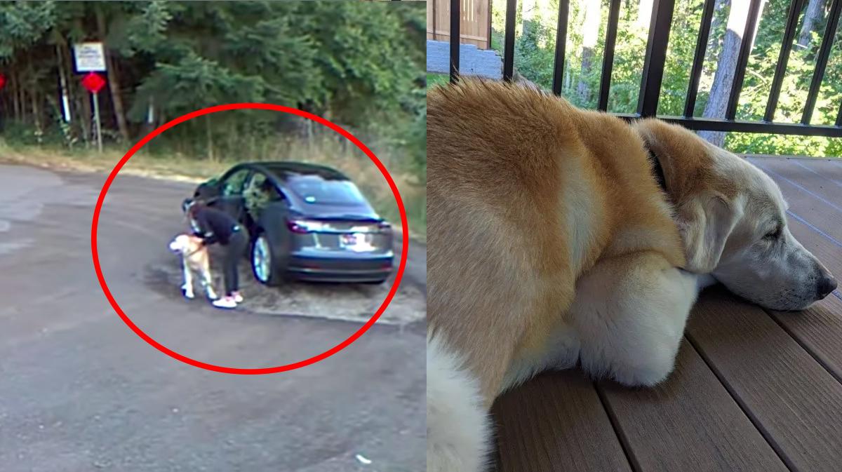 Video captura el momento en el que una mujer abandona a su perrito en el bosque