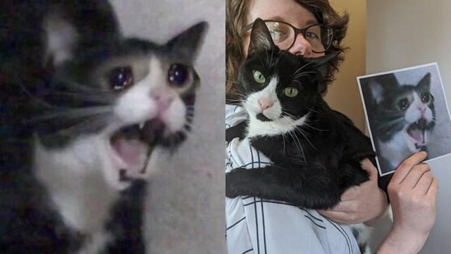 """Muere """"Screaming Cat"""", el famoso meme del gato gritando"""
