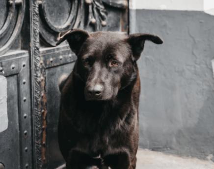 empresa contrata perritos callejeros