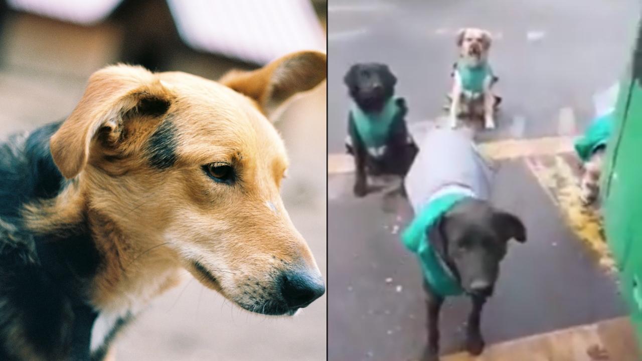 Empresa contrata perros