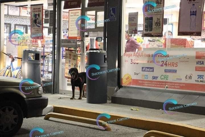 Perro secuestra tienda de conveniencia
