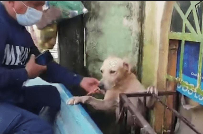 Marina adopta a perro que rescató de las inundaciones en Tabasco