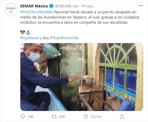 Marina adopta al perro que rescató en inundaciones