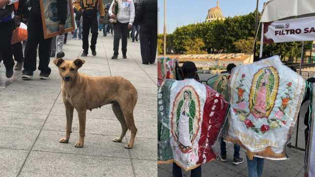 Perros abandonados en la Basílica de Guadalupe