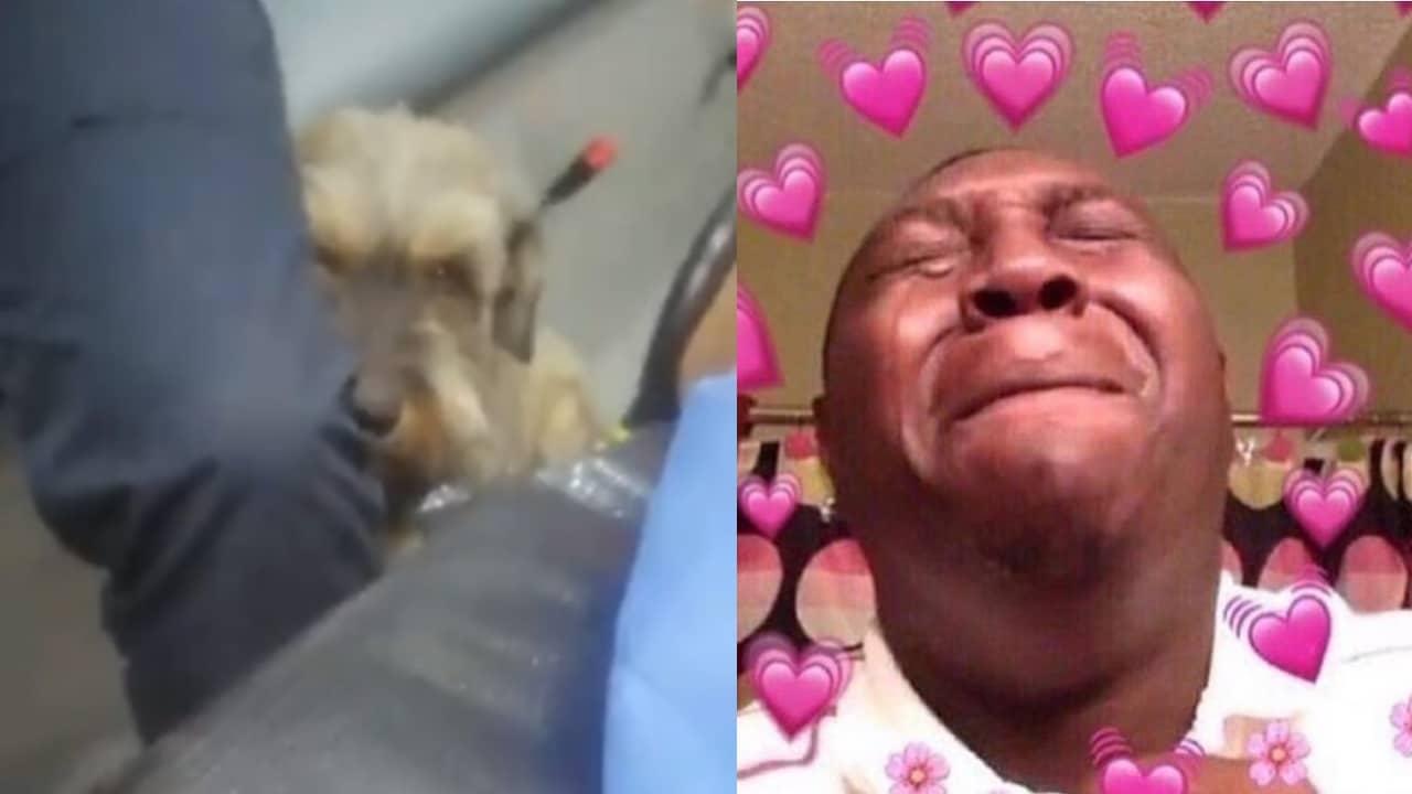 perro persiguió ambulancia por su dueño herido