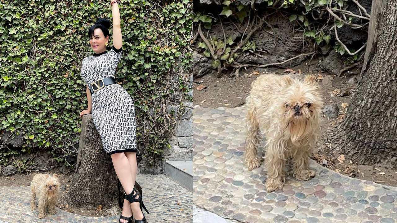 """Maribel Guardia es criticada por tener a su perro """"mugroso"""""""