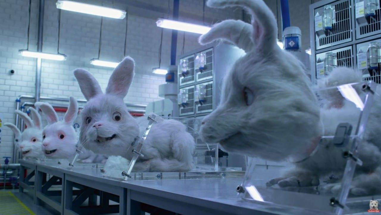Save Ralph campaña conejo pruebas cosméticas animales