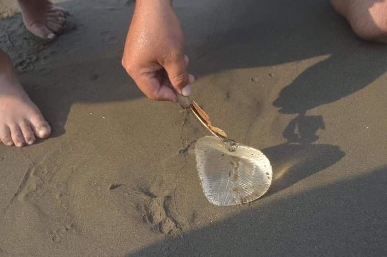 alertan por medusa era implante