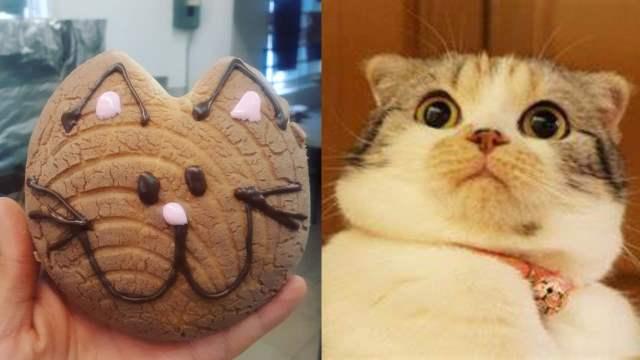 Michi concha meme gato espantado