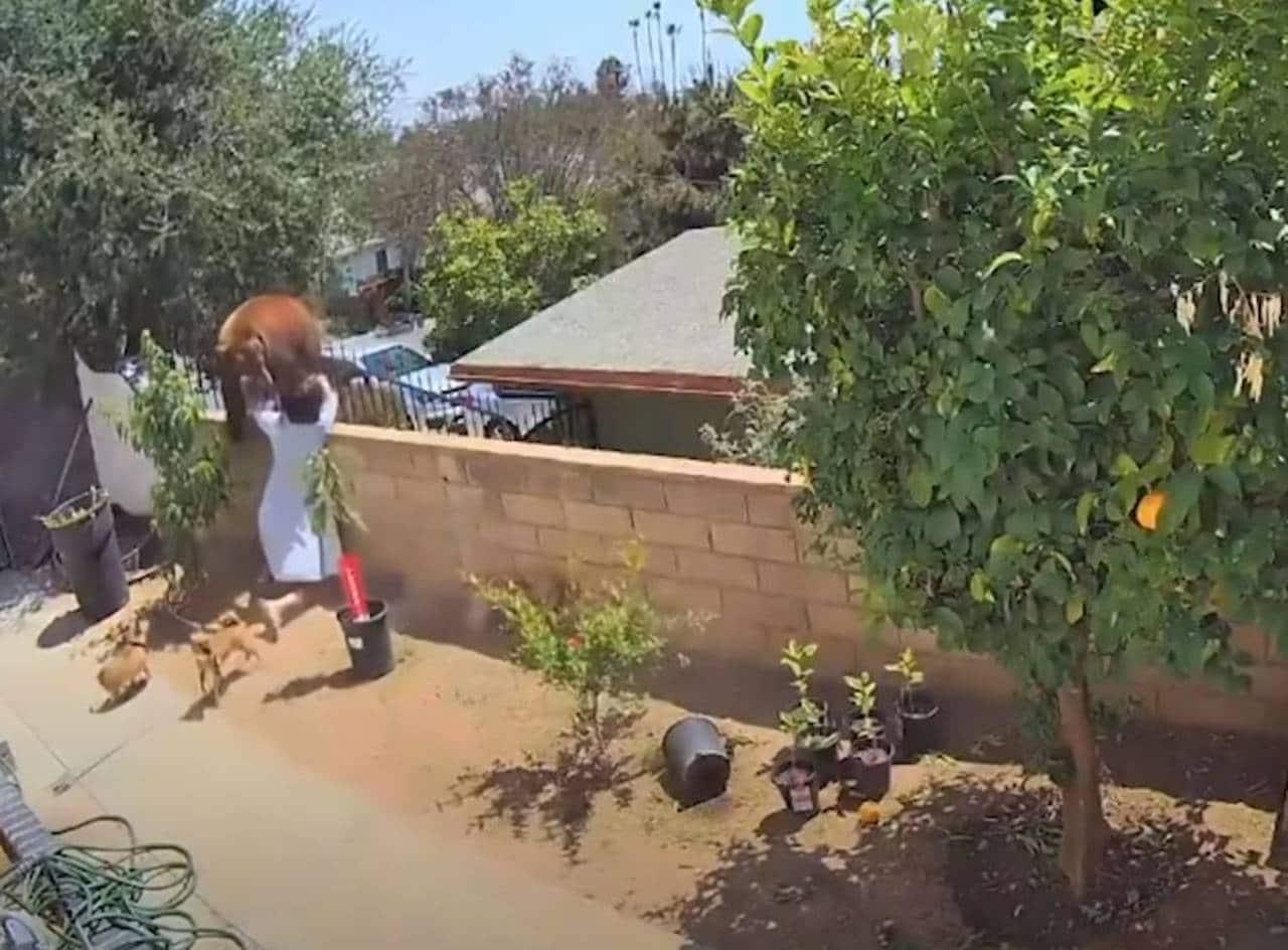 Mujer pelea con oso por sus perros