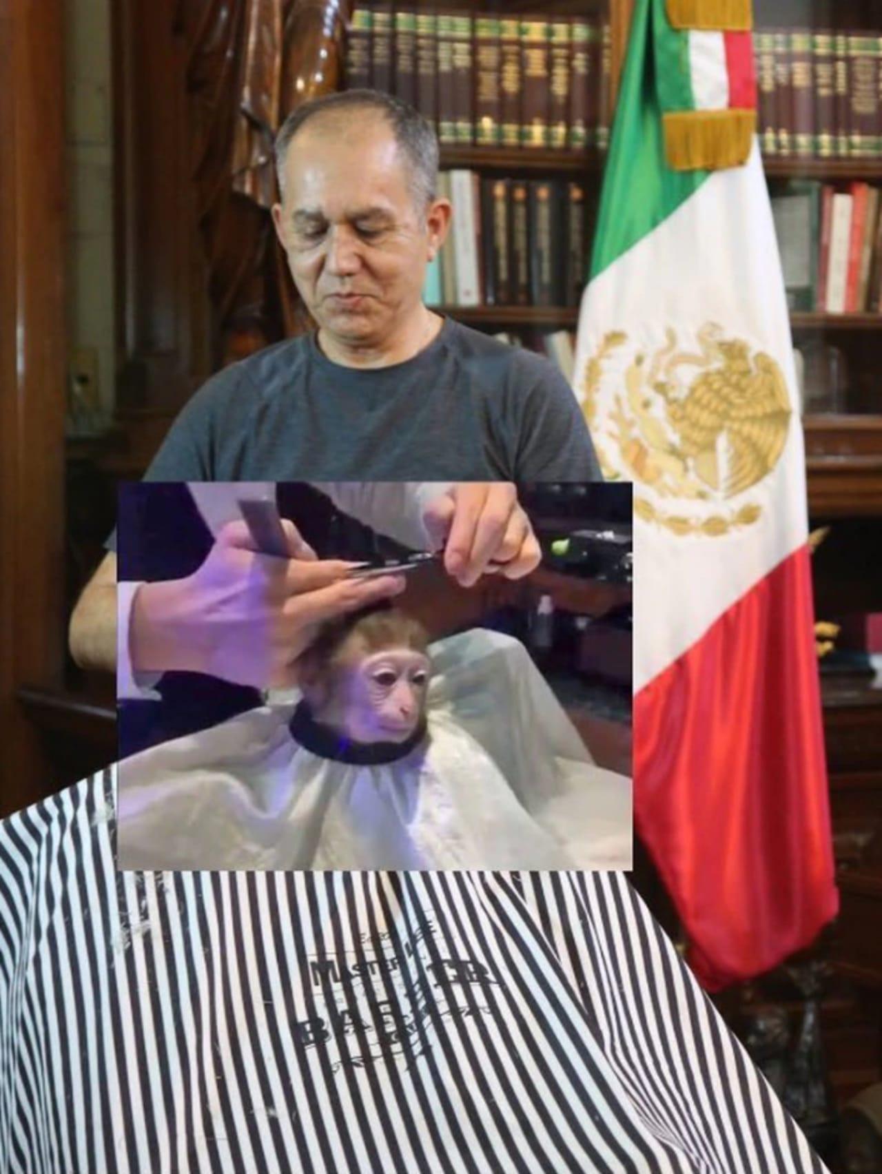 Meme peluquero AMLO mono