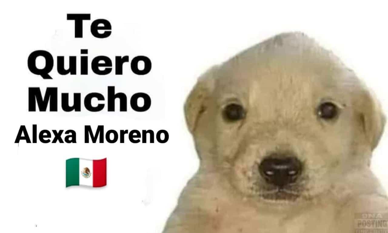 Meme perrito tqm Alexa Moreno tokyo