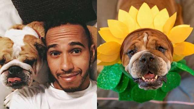 Lewis Hamilton podría ir a prisión tras denuncia por volver a su perro vegano