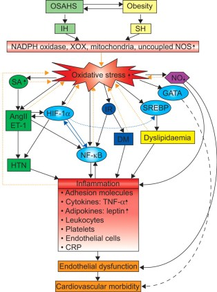 How Oxidative Stress Causes Inflammation