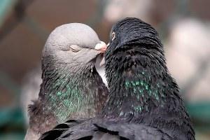 sevgililer günü romantizm