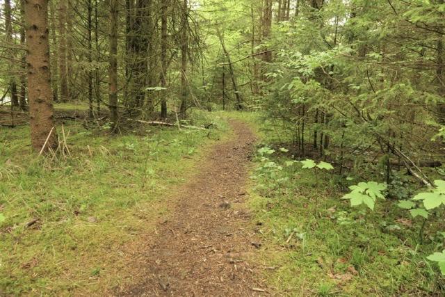Wanderweg Isarauen