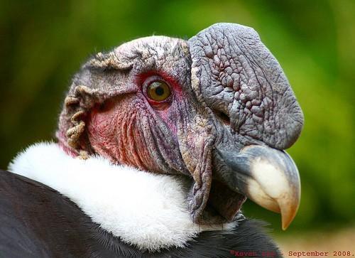 Paradosso del condor - Quel randagio di Ermes