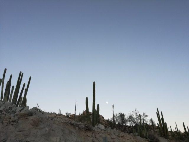 Messico 2018 - giorno #2 - Baja California - Quegli sfiziosi assaggi di nulla