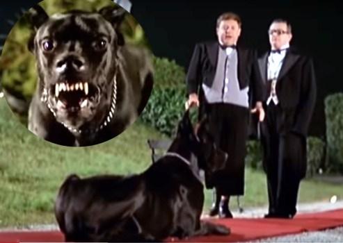 Incontri ravvicinati con cani randagi: come uscirne interi - STRAY ERMES