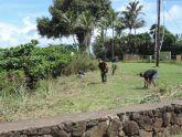 Before Kahuku end vegetation